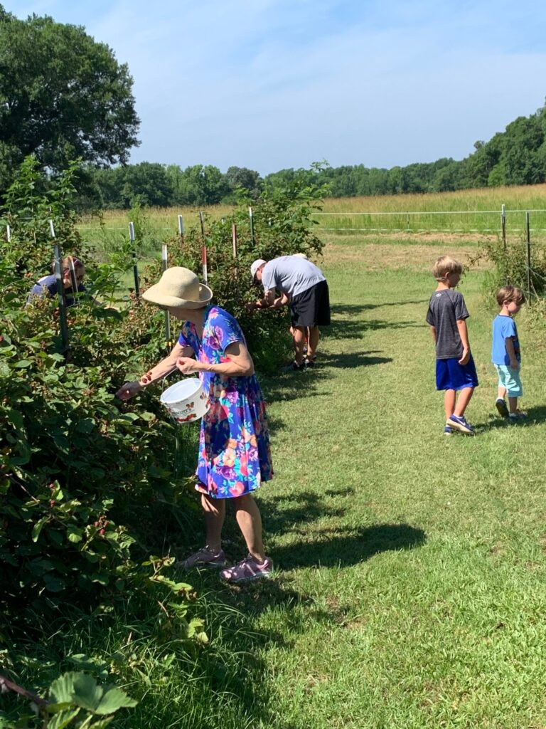 Pickers getting gallons of blackberries!
